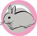 ikona králík