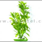 Hygrophila 18-21cm