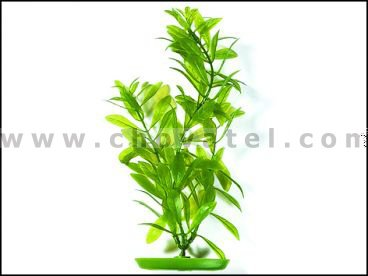 Hygrophila 13-16cm