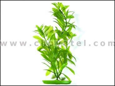 Hygrophila 25-28cm