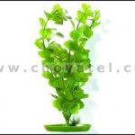 Moneywort 13-16cm